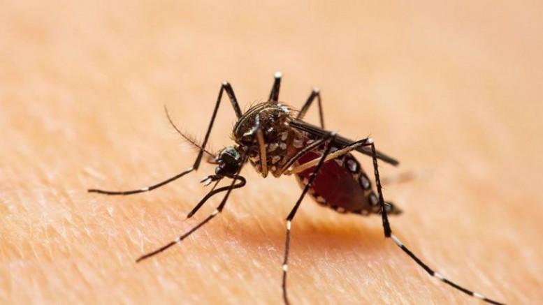 İstanbul'da sivrisinek kabusu: 'Batı Nil ateşi virüsünün taşıyıcısı'